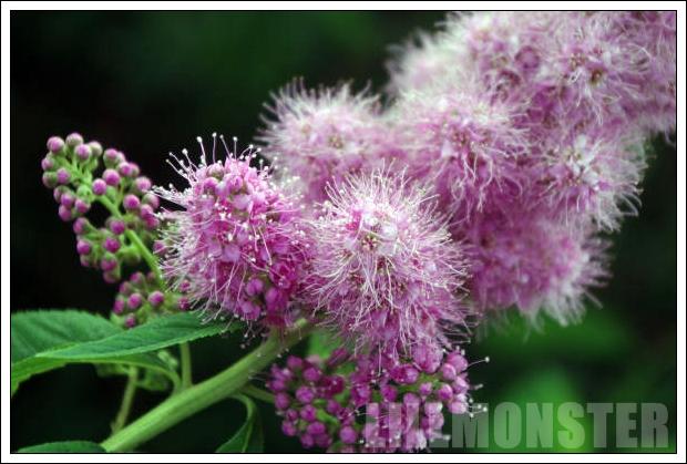 Blomma från Lindesberg
